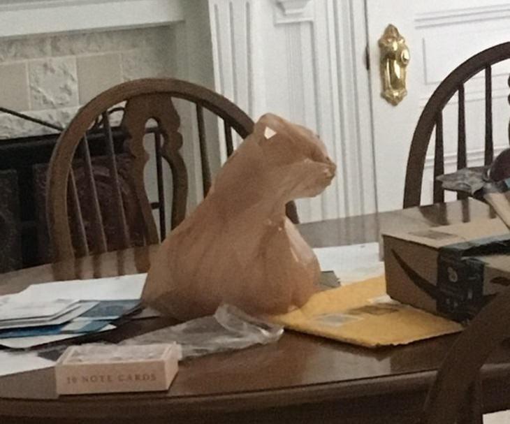 16 התמונות המצחיקות והמתעתעות: שקית ניילון שנראית כמו חתול