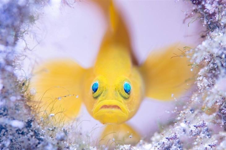 תמונות טבע מדהימות: דג צהוב במים