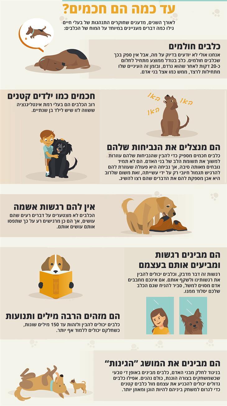 להיכנס לראש של הכלב שלכם