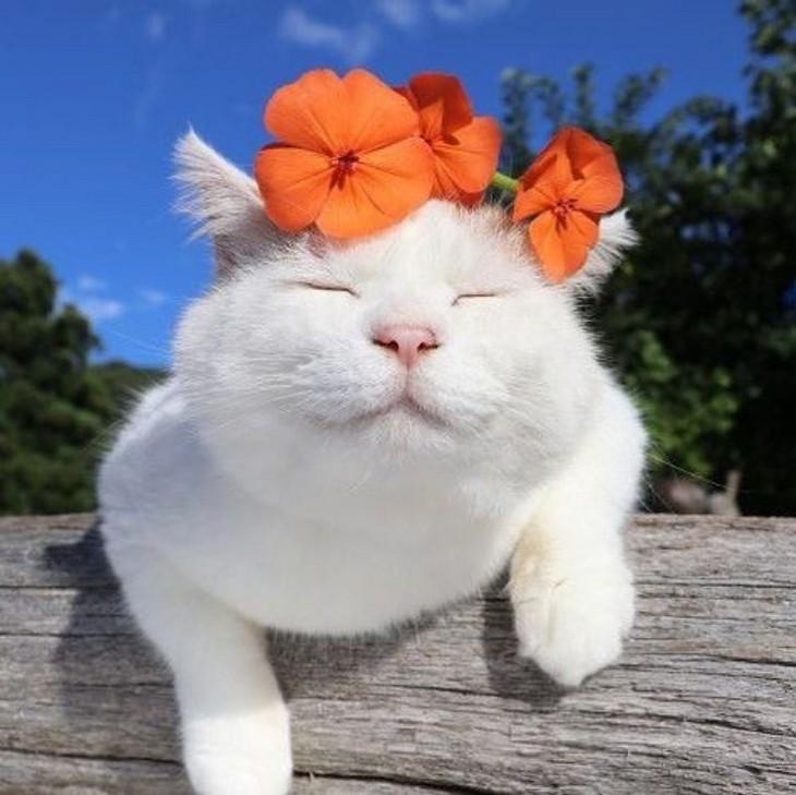 חיות מחייכות: חתולה לבנה עם זר פרחים על ראשה