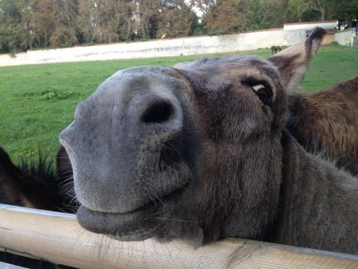 חיות מחייכות: חמור מחייך