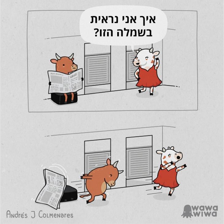 איורים משעשעים: פרה שואלת פר איך היא נראית בשמלה אדומה, והוא רודף אחריה מיד