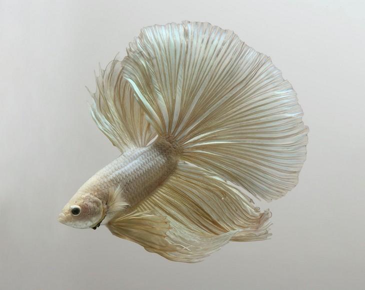 תמונות דגים: ויסארוט אנקאטאבאניץ' (Visarute Angkatavanich).