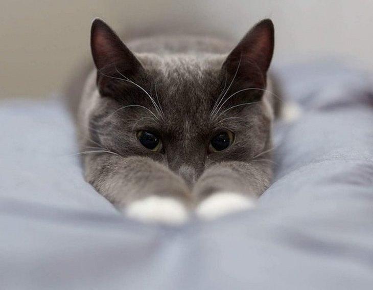 בעלי חיים חמודים: