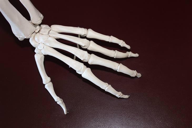 טיפול בדלקת מפרקים שיגרונית בעזרת ננו-ספוגים: שלד של כף יד