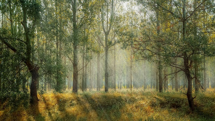 חגיגות טו בשבט:  יער