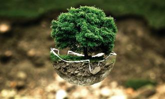 בחן את עצמך: עץ גדל בתוך חצי כדור זכוכית
