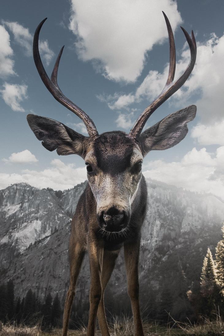 תמונות טבע מדהימות: אייל מביט ישירות לתוך המצלמה