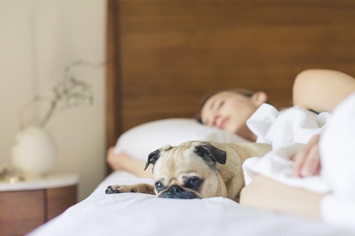 יתרונות של שינה עם בעלי חיים: אישה ישנה כשכלבה במיטתה