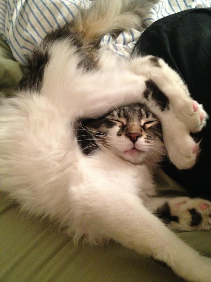 חתולים אקרובטיים וגמישים: חתול שרגליו על ראשו