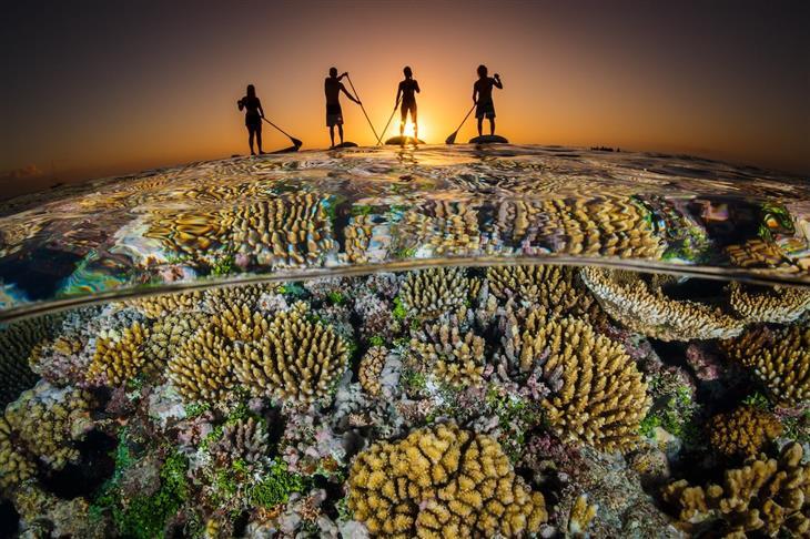 16 התמונות היפות ביותר שצולמו מתחת למים בשנת 2018: חותרים אל השקיעה מעל שוניות אלמוגים, צולם בהאפאי שבאי טונגה