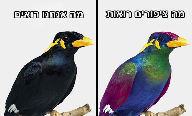 השוואות של תמונות: מה אנחנו רואים מול מה ציפורים רואות