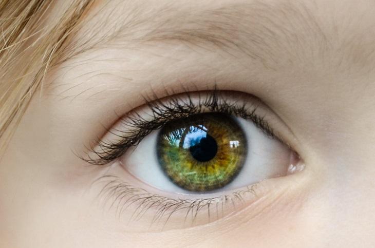 יתרונות בריאותיים של פפריקה: עין ירוקה