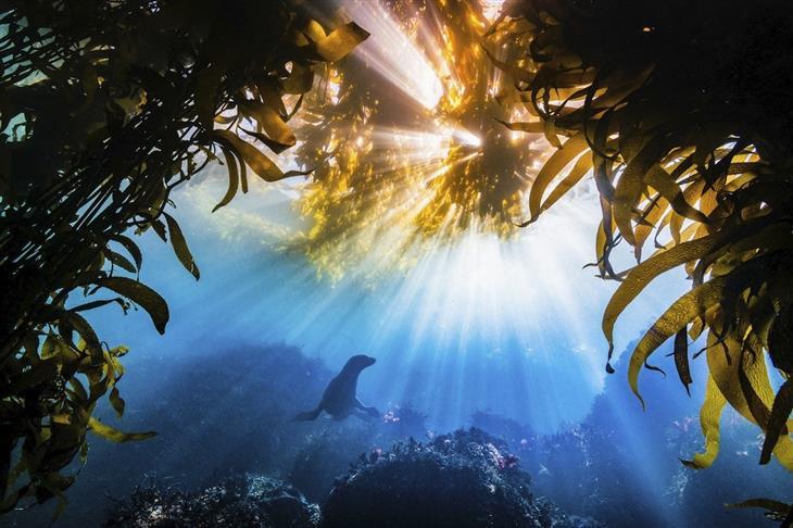 """תמונות טבע מדהימות: צלילה עם אריה ים במפרץ מונטריי במדינת קליפורניה בארה""""ב"""