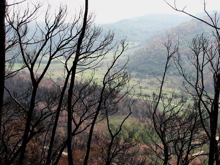 מסלולים ואתרי טיולים עם שלכת: מבט אל מסלול הליכה באזור נחל אלון דרך עצים שנפגעו בשריפה