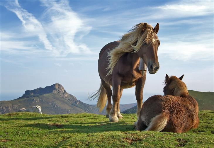 תמונות נבחרות מתוך פינת תמונות היום בוויקיפדיה: זוג סוסים על רקע הרים בספרד