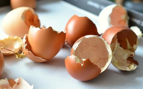 שימושים נוספים: קליפות ביצים