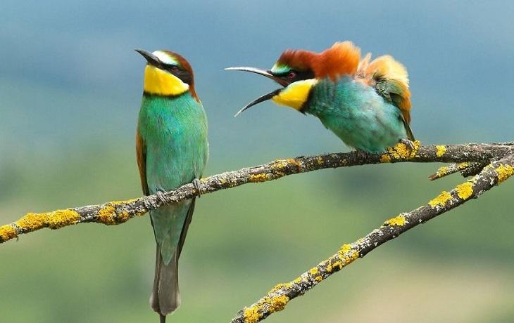 בעלי חיים מצחיקים: שתי ציפורים על ענף, כשאחת נראית כאילו היא צועקת על השנייה, וזו שלידה עומדת עם ראש מורם.