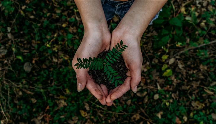 מחזור משכנתא: ידיים מחזיקות צמח