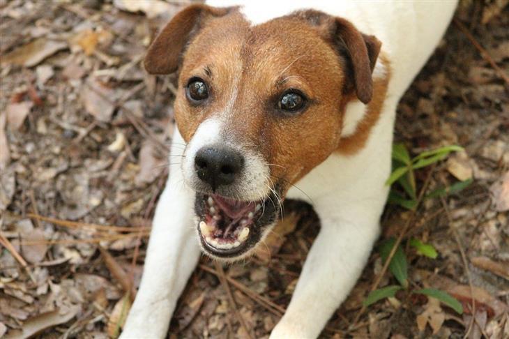 צלילים שהכלב עושה ופירושם: כלב נובח