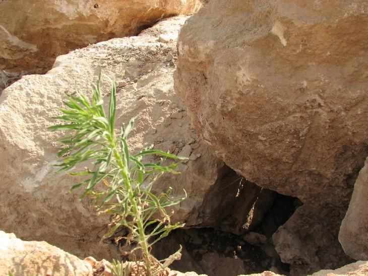 מידע על אבן כורכר: סלעים