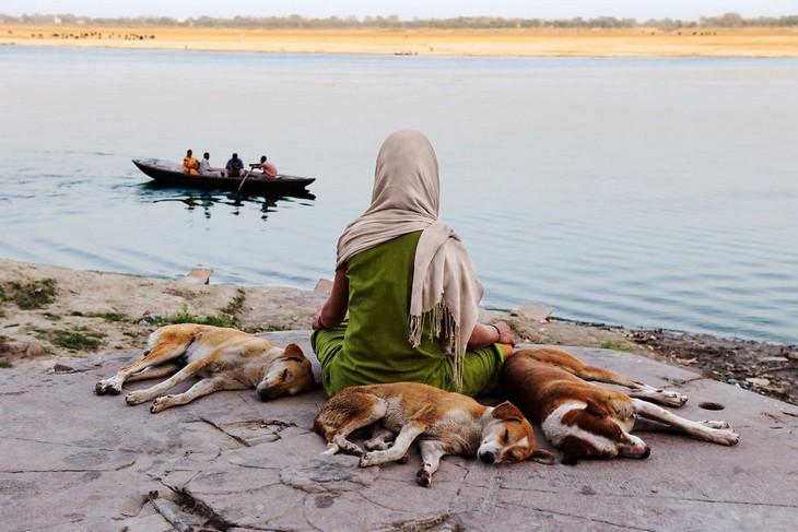 תמונות יפות של אנשים ובעלי חיים: כלבים נחים לצד אישה שיושבת על גדות נהר