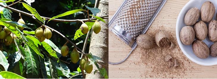 תבלינים בצורתם הטבעית: תמונה של אגוז מוסקט בצורתו הטבעית וכתבלין