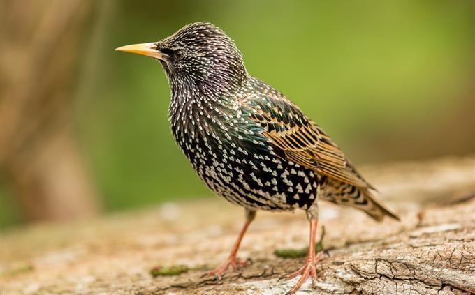 מבחן זיהוי ציפורים