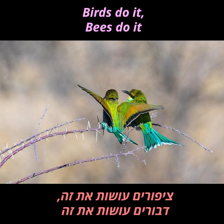 תרגום לשיר Lets do it: ציפורים עושות את זה, דבורים עושות את זה