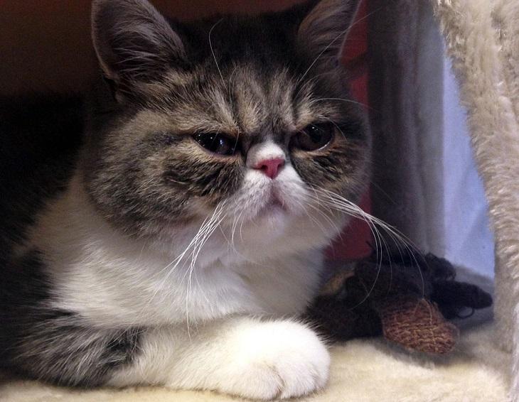 בדיחה על חיות מחמד שהגיעו לגן עדן: חתול עם מבט משועמם