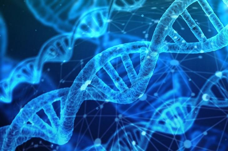 יתרונות וחסרונות באכילת גרעיני חמנייה: מולקולות DNA בצבע כחול