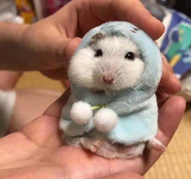 חיות לבושות לחורף: מכרסם קטן בשכמייה