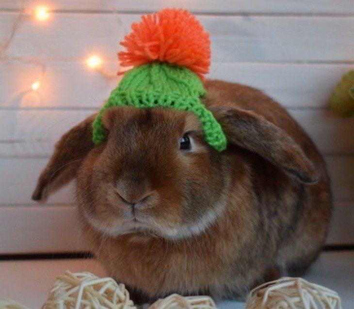 חיות לבושות לחורף: ארנב בכובע צמר