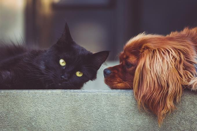 בחן את עצמך: כלב וחתול