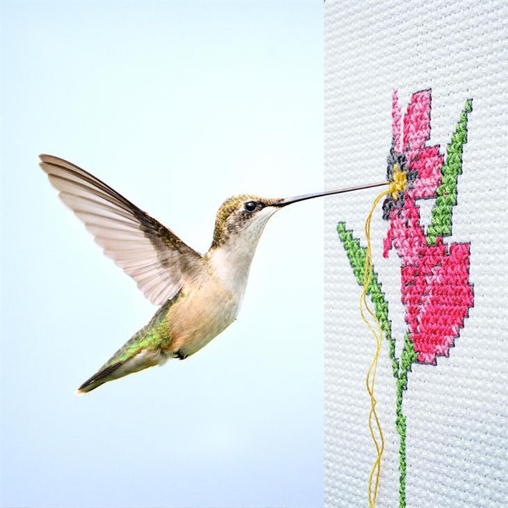 תמונות קולאז' מתעתעות: ציפור יונק דבש רוקמת פרח