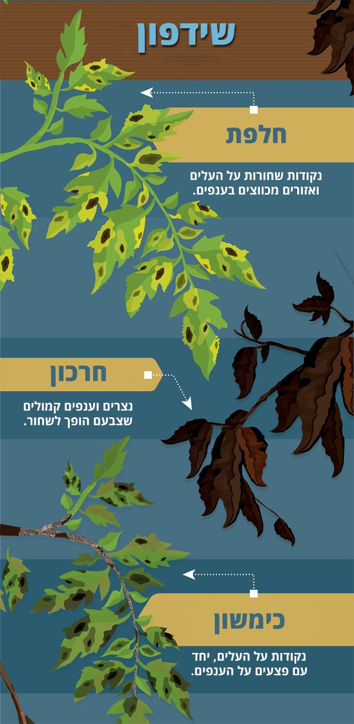 איך לזהות מחלות בצמחים ולטפל בהן: חלפת, חרכון וכימשון