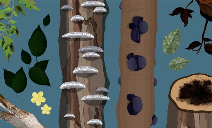 איך לזהות מחלות בצמחים ולטפל בהן: איורים של צמחים עם מחלות שונות