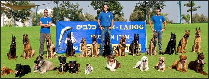אילוף כלבים: מאמני כלבים וכלבים