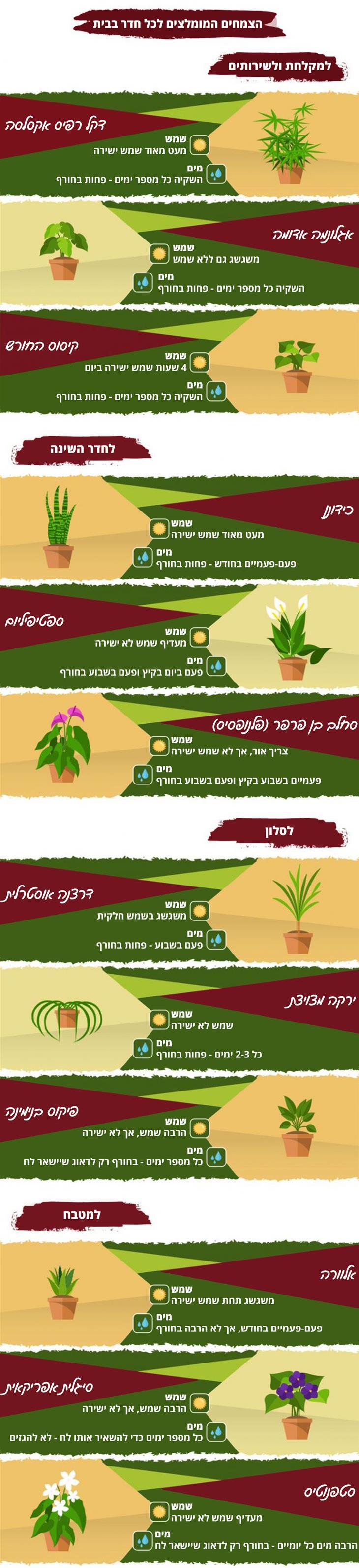 המדריך השלם לגידול צמחים בתוך הבית