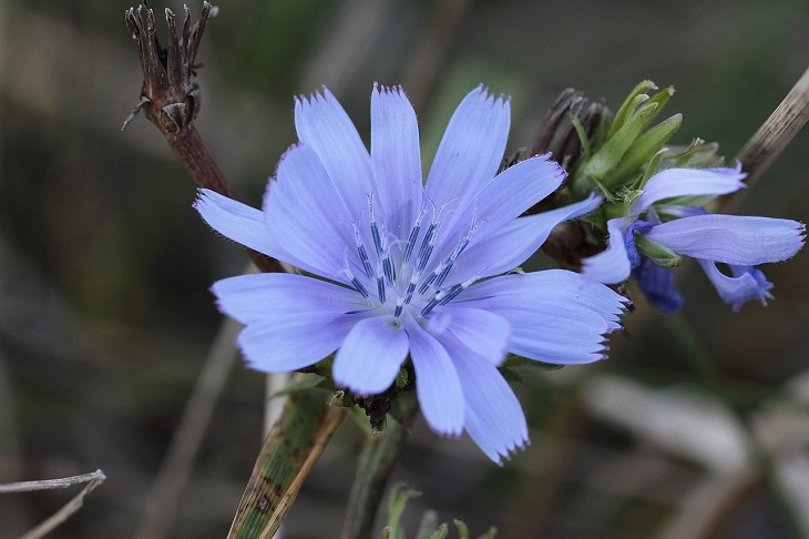 יתרונות העולש: פרח של צמח העולש