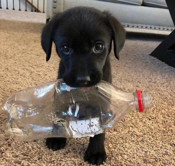 כלבים חמודים: גורה עם בקבוק פלסטיק בפה