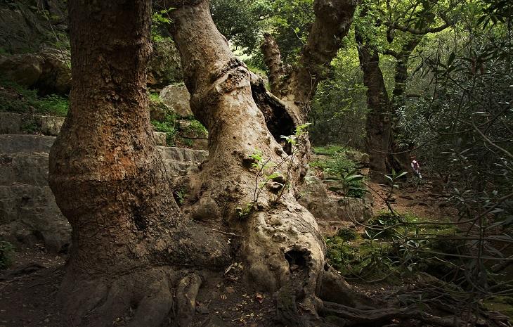 מסלולי טיול בגליל המערבי: חורש ירוק במסלול נחל שרך