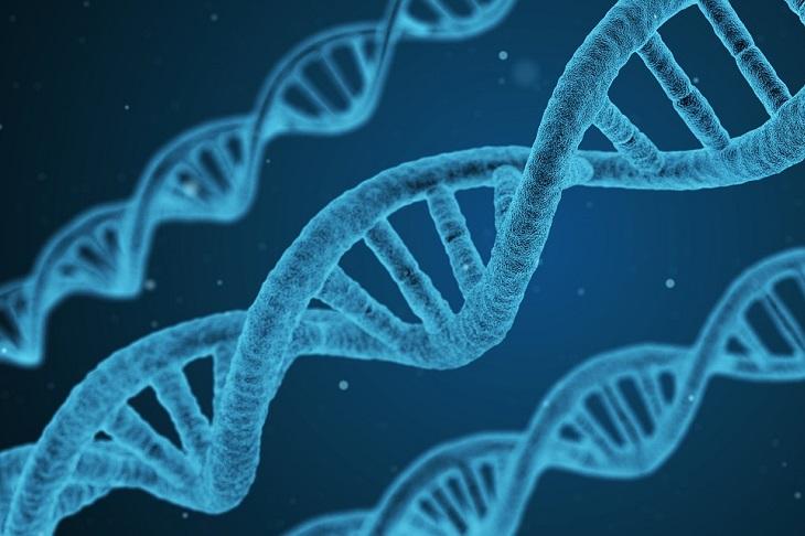ספירולינה: סלילי DNA