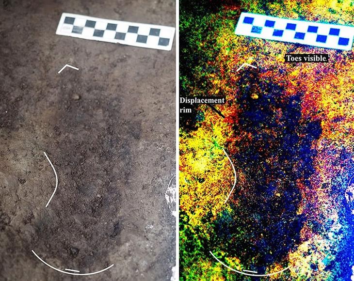 תגליות ארכיאולוגיות: טביעת רגל פרה היסטורית