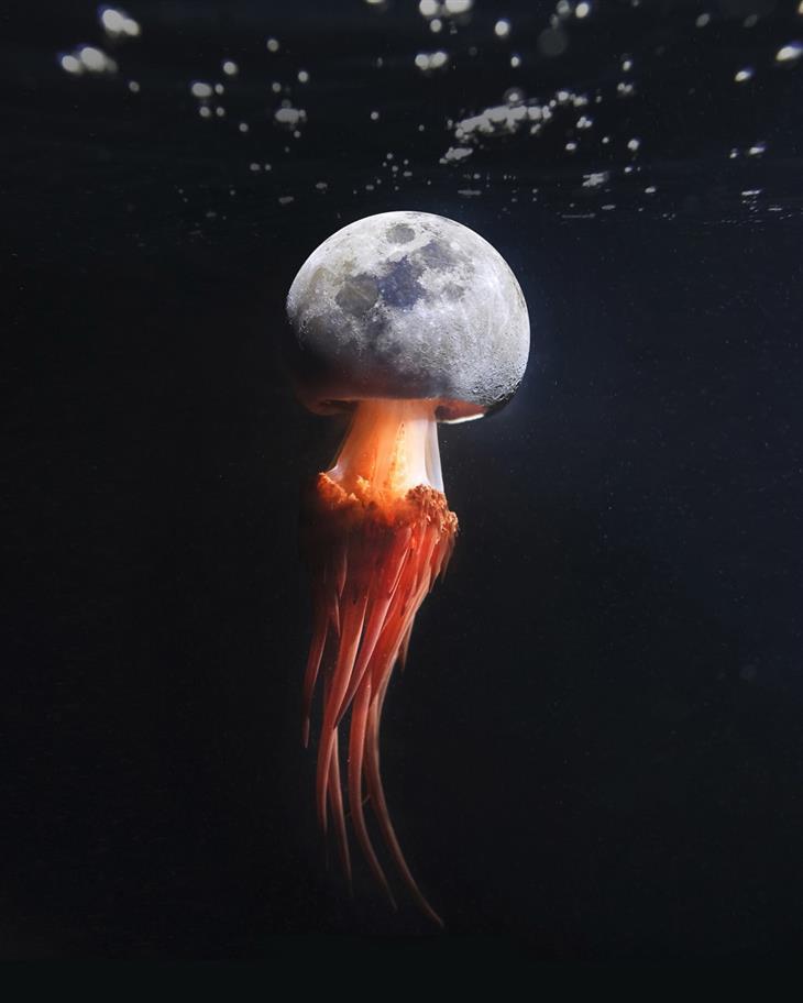 תמונות משולבות: ראש ירח למדוזה