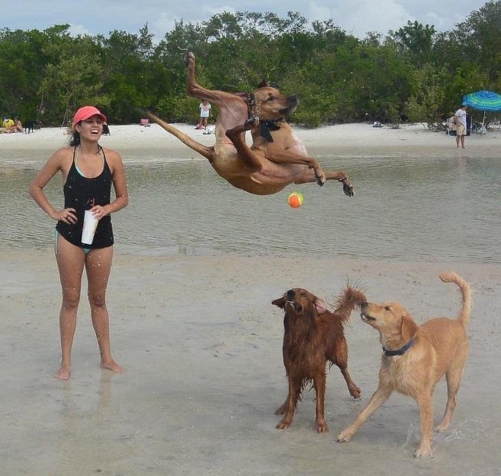 תמונות של חיות ברגע הנכון: