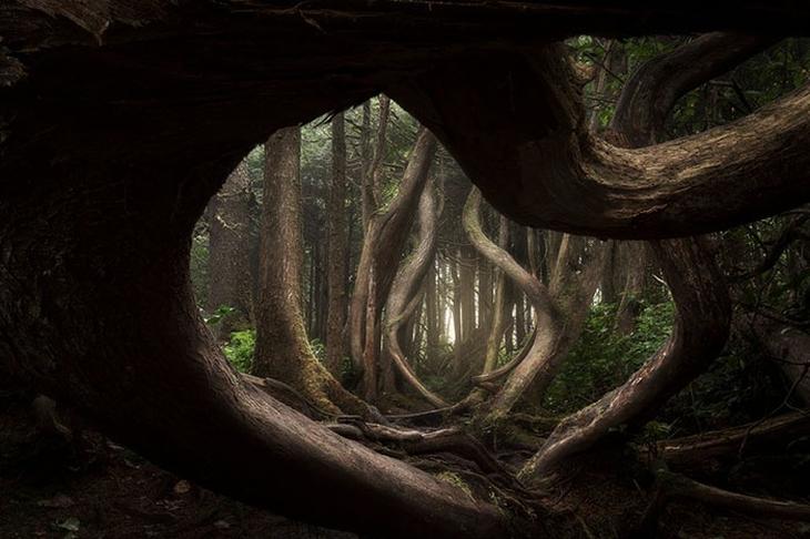 נופים בלתי נשכחים: האי ונקובר, קולומביה הבריטית, קנדה