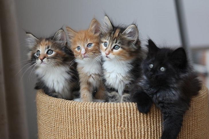 בדיחת ארבעת החתולים - ארבע חתולים