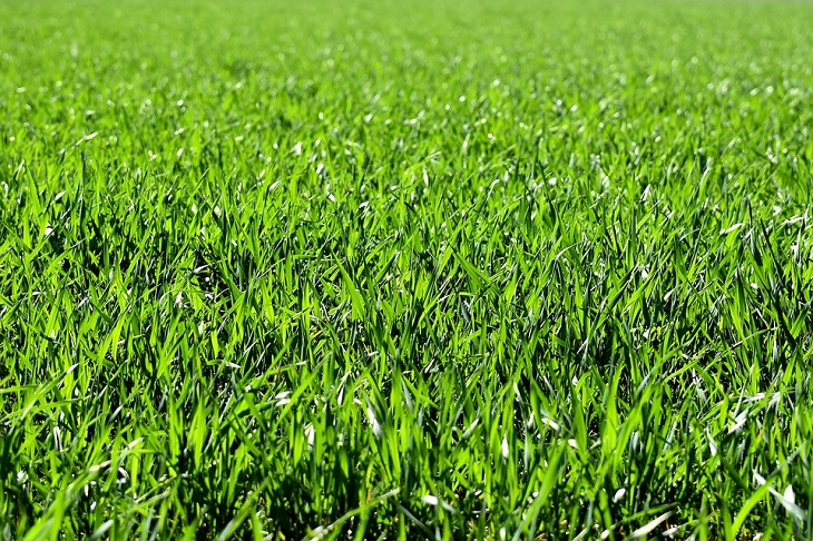 שקרים שאנחנו מספרים לעצמנו: דשא