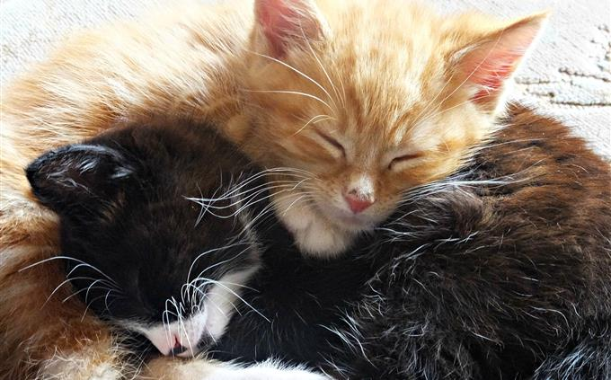 מבחן זיכרון של סרטונים: חתול ג'ינג'י ושחור